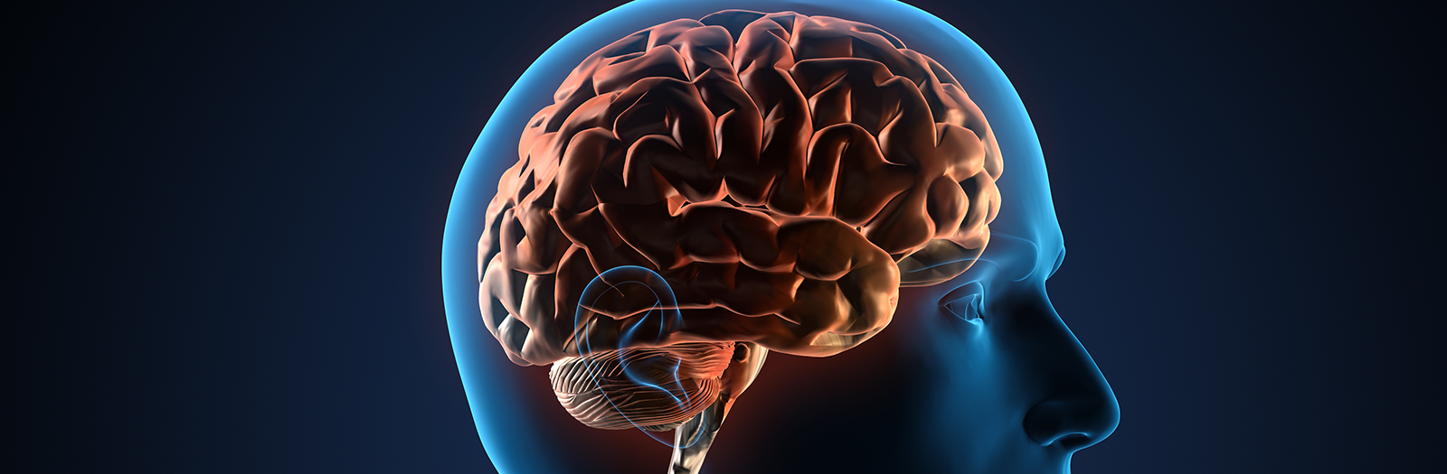 The Brain Power Protocol course image